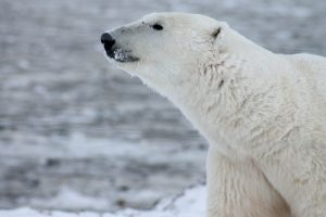 Power Efficient Home Offices Can Save Money And Polar Bears